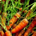 Морковь — яд для курильщиков