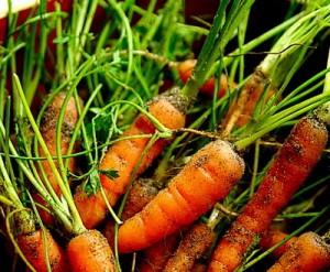 Морковь яд для курильщиков