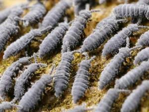 Малявочки, обитающие в почве