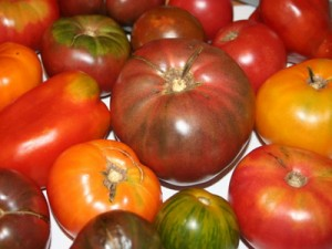 помидор ранний и поздний