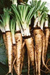 овощная устрица