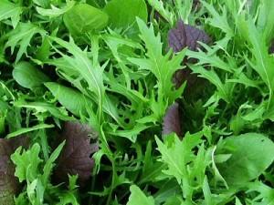 повторный посев зелени